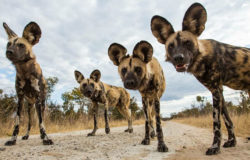 New entrance into Hwange National Park opens
