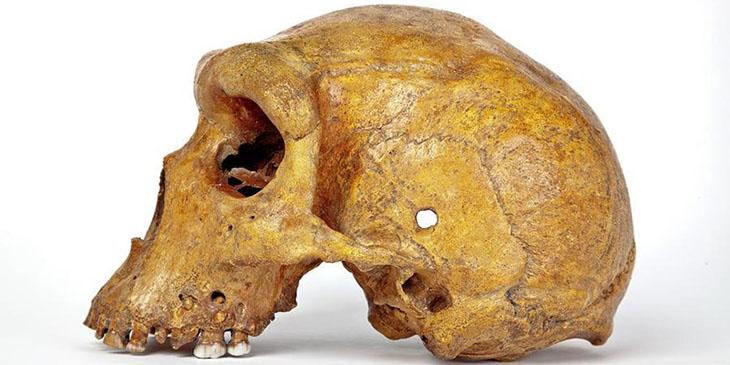 Zambia to establish a natural history museum